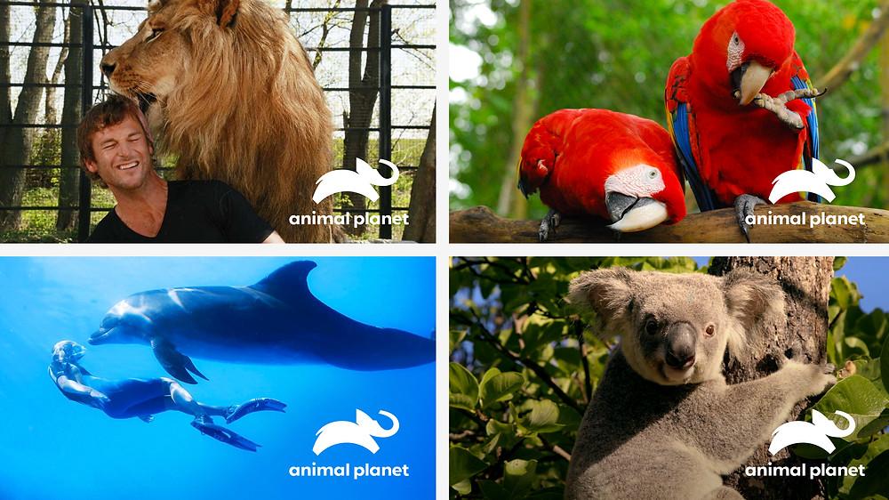 Animal Planet Quad