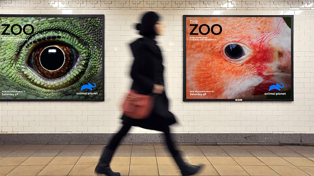 Animal Planet Posters