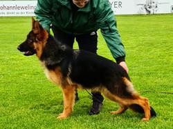 Mac puppy photo