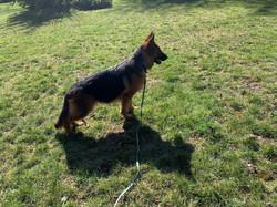 Zeppa shadow