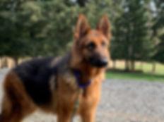 Zeppa 6.jpg