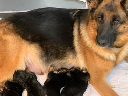 awani and pups 3
