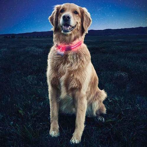 Nite Dawg - Collar LED para perro