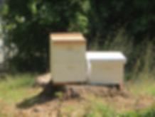 84_Aug15_Bees.jpg