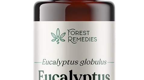 Eucalyptus Essential Oil (15mL)