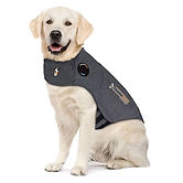 thundershirt photo.jpg