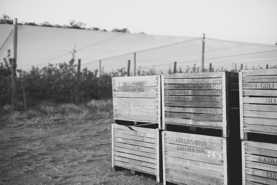 Collins Bros Orchard // Rural Property Shoot // Pemberton
