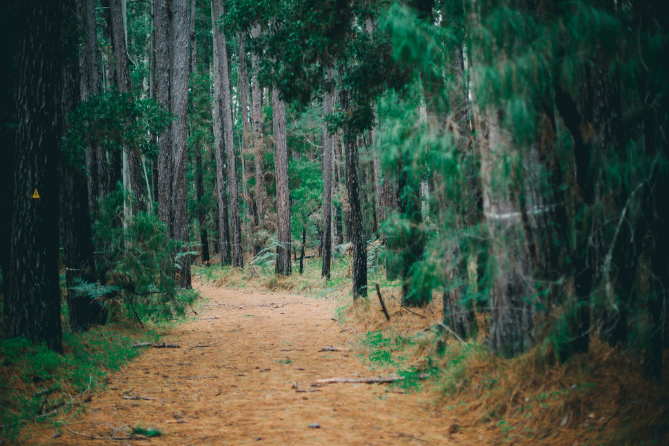 Fun in the woods // Donnelly River Village to Pemberton // Manjimup Photographer