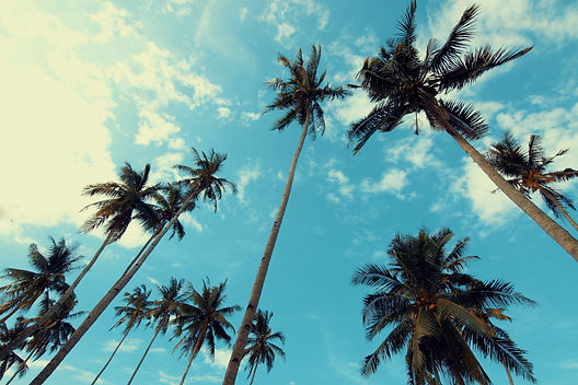 coconut-trees-low-angle-shot-palm-trees-