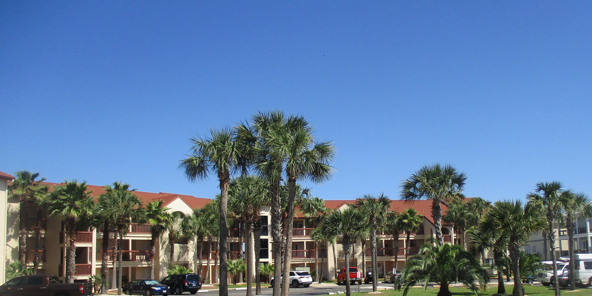 Sunset Harbor Palms
