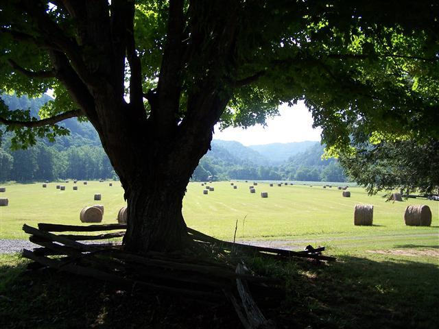 Beautiful pasture on farm