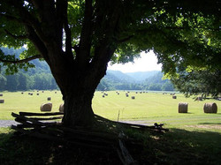 Beautiful pasture on farm