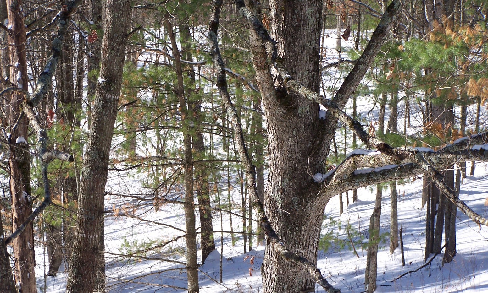 Winter in West Virginia, near ski resort
