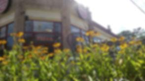 mojo-flowers.jpg