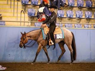 New Horse photos