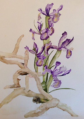 IRIS AND DRIFTWOOD.jpg