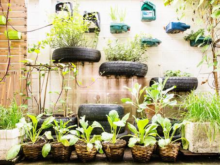 Bonus Episode: Urban Gardening Tips