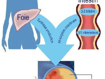 J'ai du cholestérol : qu'est-ce que c'est ?