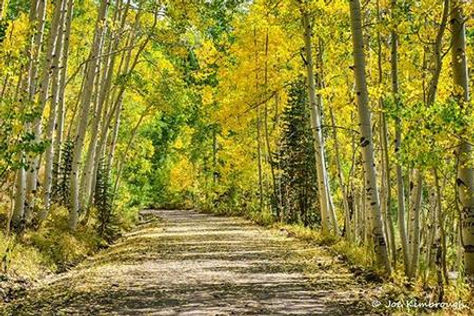 Durango dirt road through the woods.jpeg