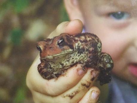 מעשה בארון, ילד וצפרדע. על נתינה וקבלה קיומיות.