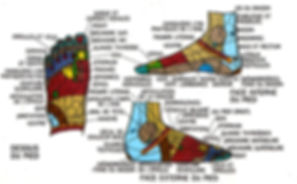 Réflexologie plantaire Alencon, pied terminaisons nerveuse, céline léonce