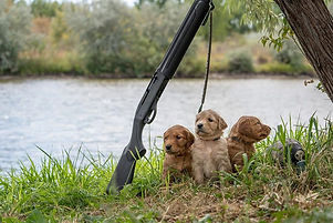 My little hunters