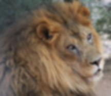 exotic animal rescue sanctuary in arizona