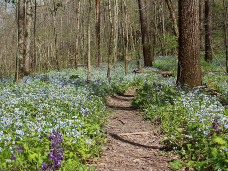 Lay Me Down in Wildflowers: An Easter Message
