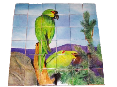 Guacamayas del desierto