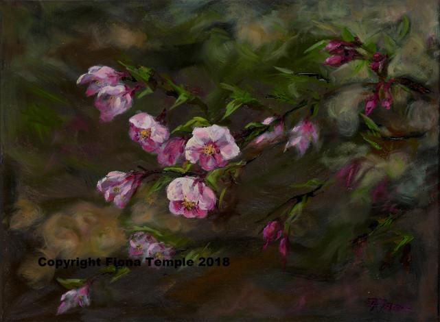 """Cherry Blossom - Oilon canvas  305 x 410 (12""""x16"""")"""