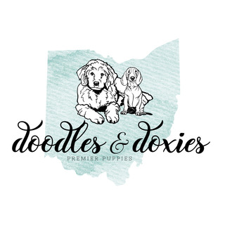 DOXIES AND DOODLES e3.jpg