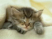 chaton-mignon.jpg