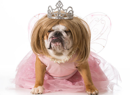 A Dog, Cinderella, and Your Job Search