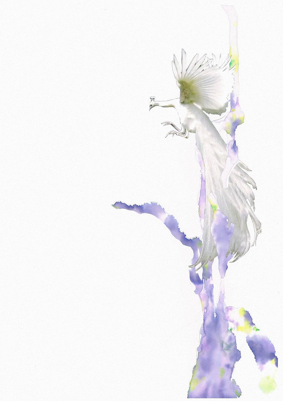 scan-001-2_edited_edited.jpg