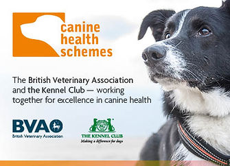 Healthy Bloodhound