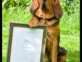 Award Winning Forager