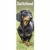 Dachshund Slimline calendar 2021