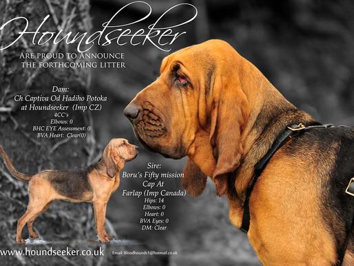 Advert Design For Dog Breeders