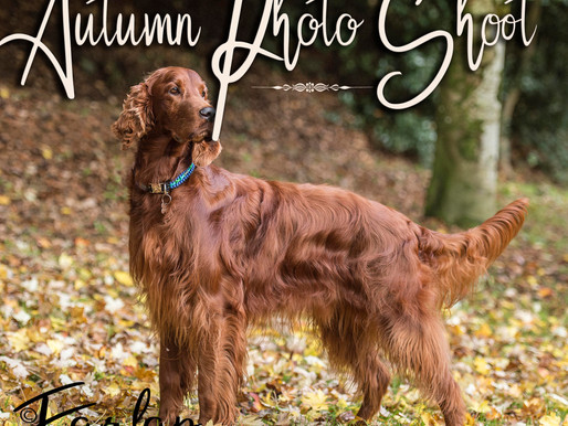 Autumn Photo Shoot for ALL Dog Breeds