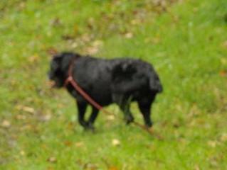 Dartmoor Search