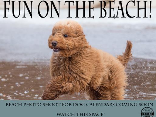 Beach shoots starting up again soon