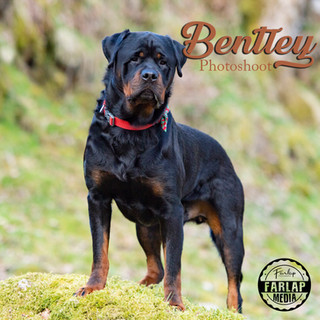 bentley.jpg