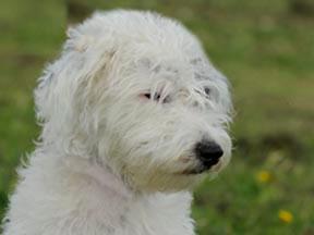 Missing Terrier, Okehampton Devon
