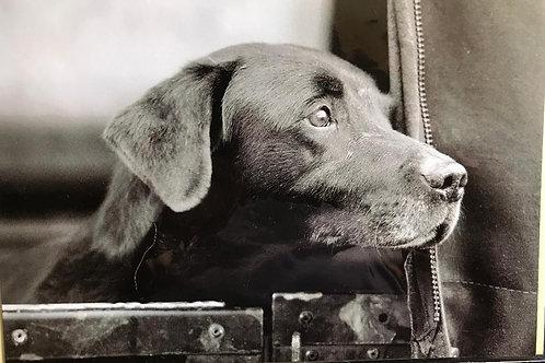 Labrador In Landrover Greeting Card