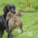 Gundog Field trials