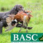 basc_102_0053_18.jpg