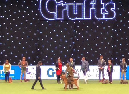 Crufts     WOW