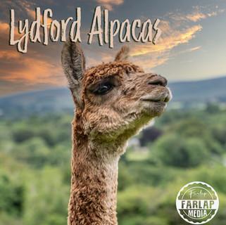 lyd_cover alpacas.jpg