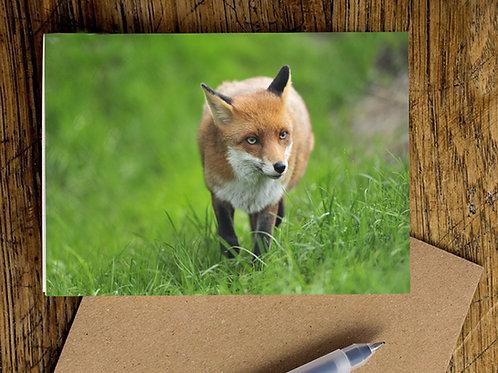 Foxy Greetings Card