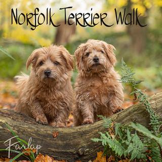 norfolk walk.jpg